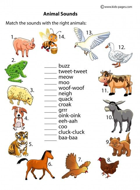 Explore Worksheets It S, Animals Sounds, and more!