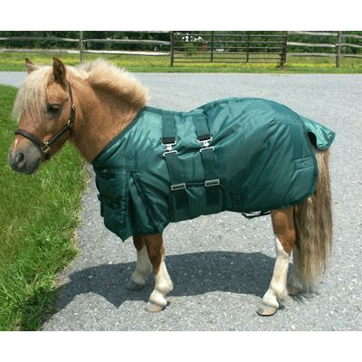Miniature Horse Turn Out Blanket