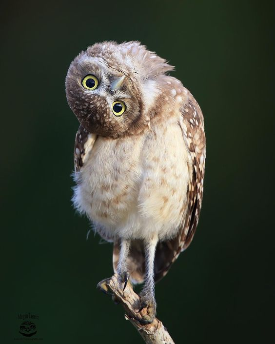 In many cultures, the owl is a symbol of wisdom. And as we know, wisdom is always about having a sense of humor. Perhaps it's the reason owls are such funny and inimitable animals. Their charisma and cuteness can cheer people up since they love to share their most exciting emotions with us.
