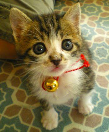 可愛い子猫 - Google 検索