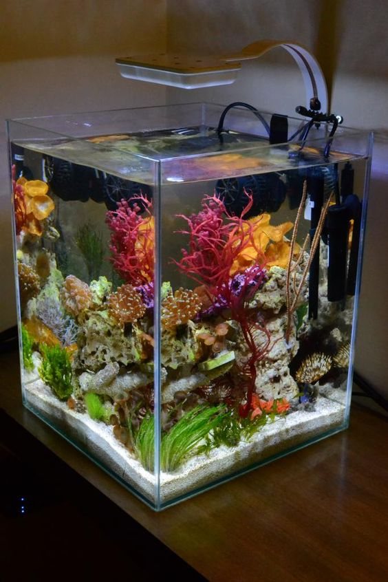 Water me happy and grey on pinterest for Small saltwater fish tank