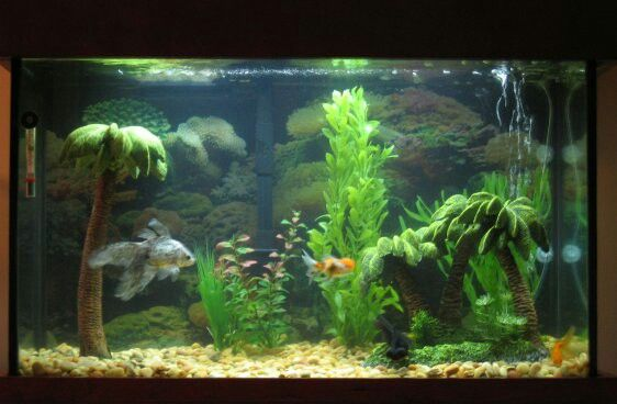 Fish Tank Palm Tree Decorations Palm Trees Fish Tank