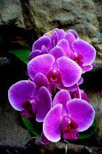 Purple Flora Wallpaper