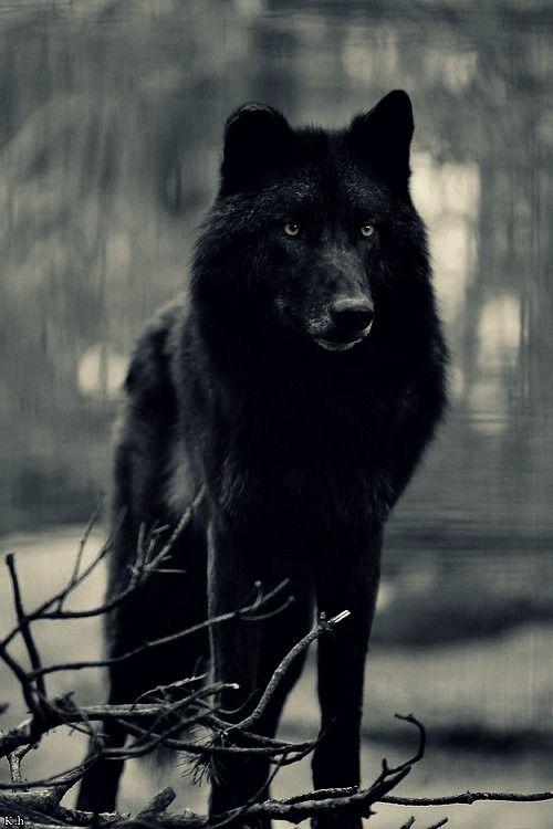 wild und wolf