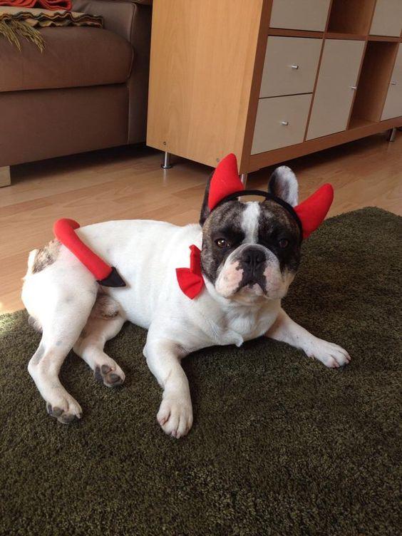 (Hunde)Teufelchen