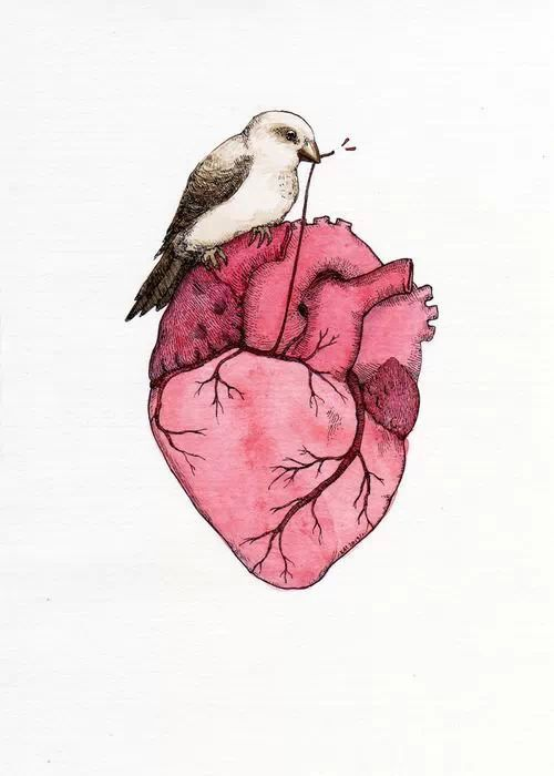 Anatomical Heart Art: