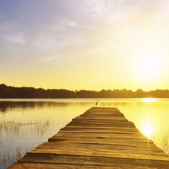 Nehmt euch mal wieder Zeit für euch und genießt einen erholsamen Wellnessurlaub in Bad Saarow, am Scharmützelsee. Die natürliche Umgebung …