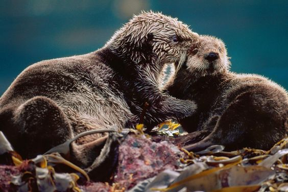 Sneak a Peek at 7 Pictures of Sea Otters at Home