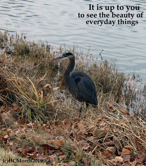 Great Blue Heron on the edge of a lake with words
