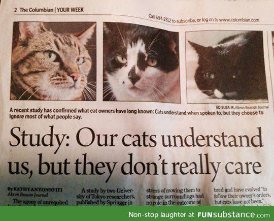 In meinem Katzenkrimi war es noch Fiktion. Jetzt ist es offiziell ... unsere Katzen verstehen uns