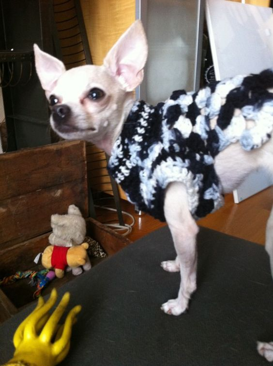 crochet sweaters chihuahuas and crochet on pinterest. Black Bedroom Furniture Sets. Home Design Ideas