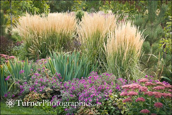 Beautiful karl foerster grass asters and sedum front for Front yard ornamental grasses