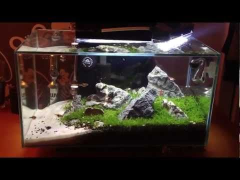 My 6 Gallon Fluval Edge 5 Weeks Youtube Aquascape Gallon Waterford Linens