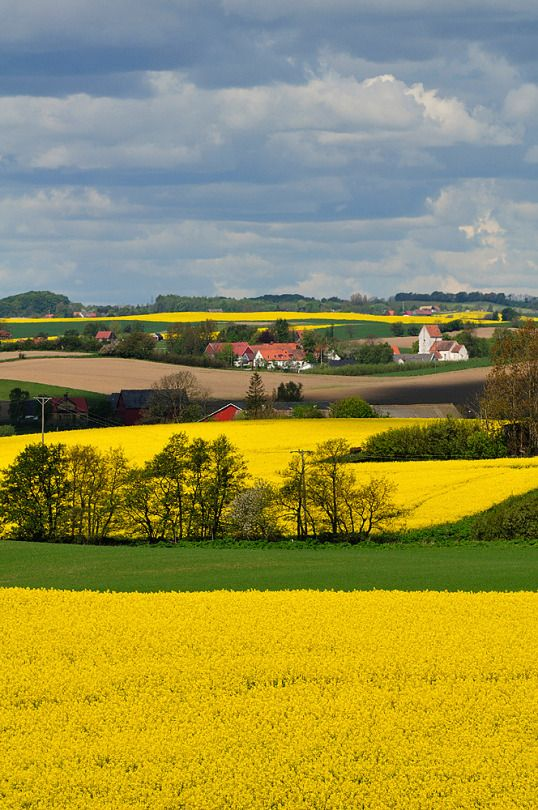 Skåne - Early summer in southern Sweden| Repinned by ...