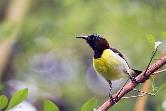 Birdiee