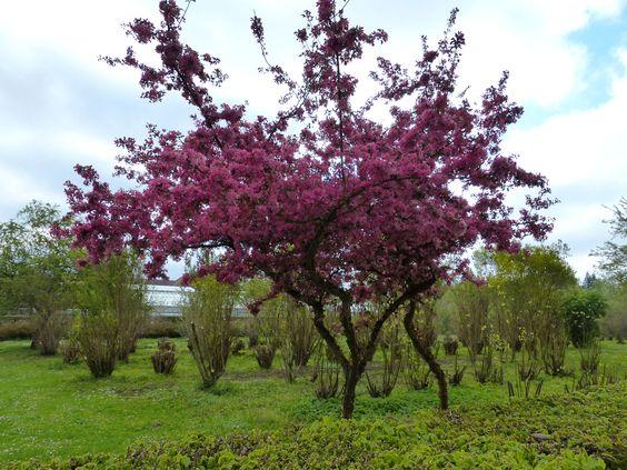 Frühling in München: ...und es blüht und blüht und blüht