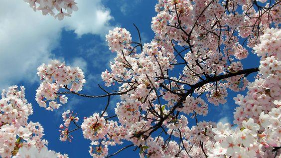Mix aus Sonne und Wolken: Samstag lässt vielerorts Frühlingsgefühle aufkommen