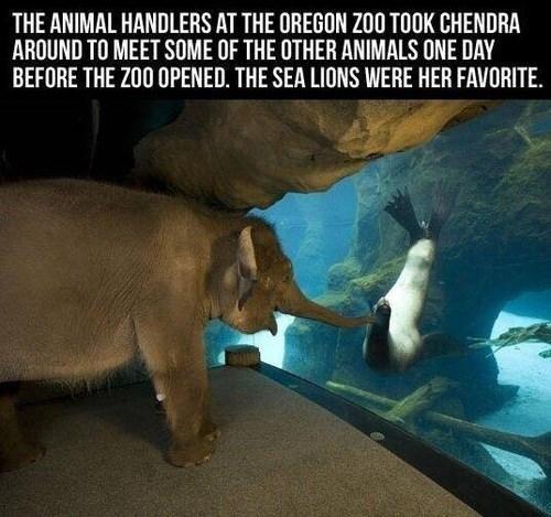 Elephant loves sea lions
