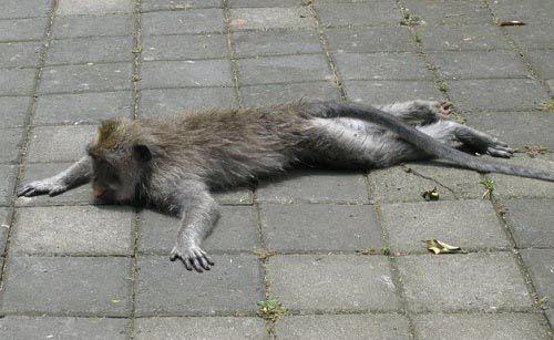 Funny animal planking (17 Photos)  #animal #funny #animals #lough #meme #socialmedia #malta www.ICanDoThings.com