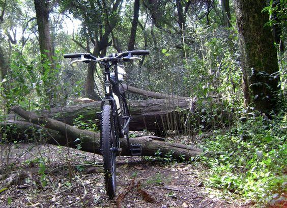 mi bicicleta , en el bosque