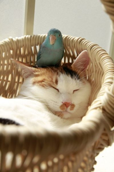 That bird wouldn't last long on my cat's head. (Or my dog's head, for that matter.)