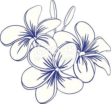 Beautiful Hand Drawn Plumeria Flowers Pretty Cute Sketch Flower Outline Flower Drawing Watercolor Flowers