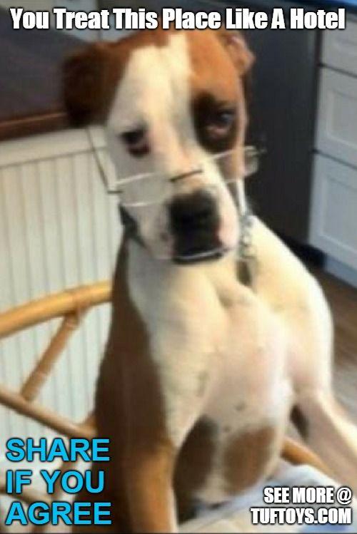 Funny Dog Memes Part 4 Funny Dog Memes Funny Dogs Dog Memes