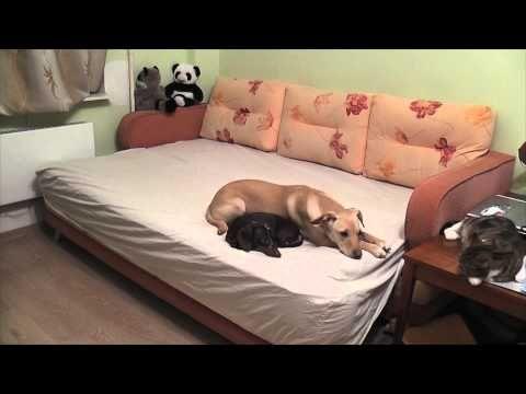 ¿Alguna vez te preguntaste qué hace tus perros mientras te esperan? - YouTube