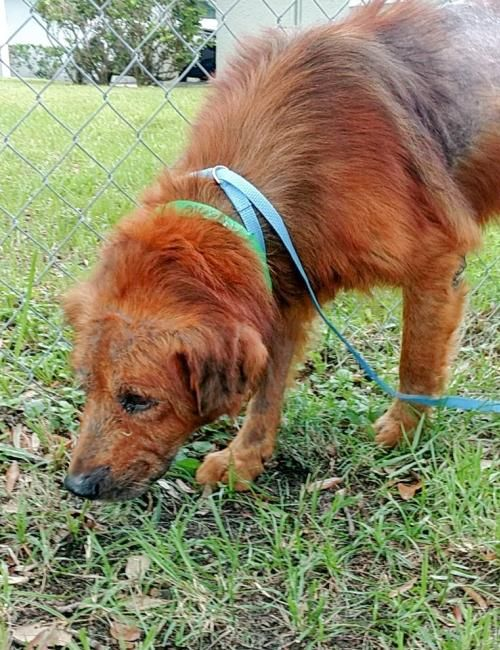 Pin On Dogs For Rescue