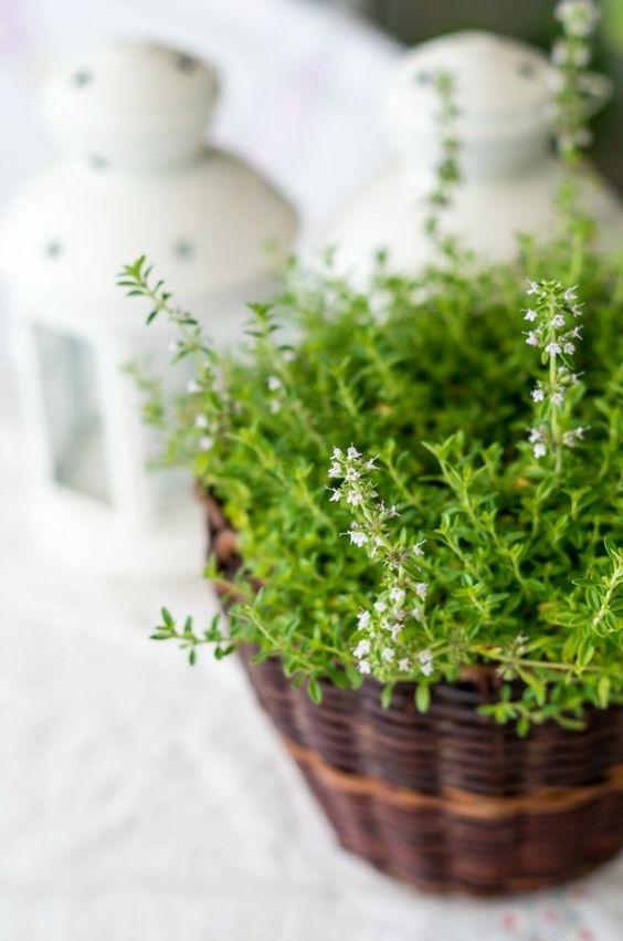 zimmerpflanzen wenig licht brauchen topfpflanzen arten, Garten und erstellen