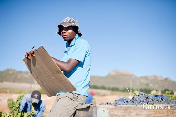 Citrusdal Wines | Changing Lives  #Fairtrade #wine