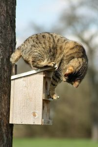 Protect birds from predators, like cats, by mounting your bird feeder on a pole instead of a tree. Discover useful tips for keeping predators away from your birds on Duncraft's Wild Bird Blog, where we connect bird lovers with the products they need to succeed in bird feeding.