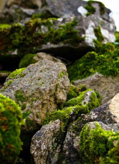 batesnursery: natureversusphotography: