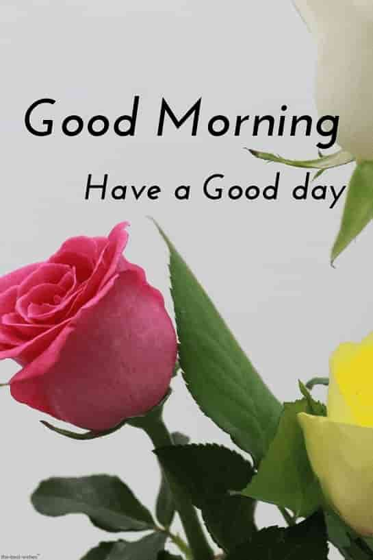 Best Good Morning Hd Images Wishes Pictures And Greetings Good Morning Images Flowers Good Morning Flowers Good Morning Images