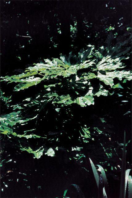 Takuma Nakahira, 'Why an illustrated human-animal dictinonary   #21-187,' 2004, Aki Gallery