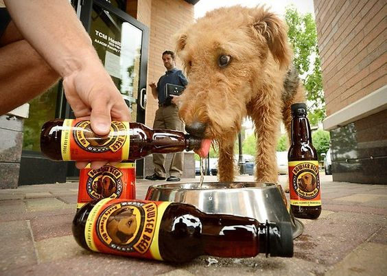 Fancy - Bowser Beer for Dogs