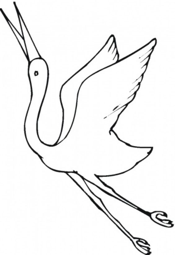 Beautiful Crane Bird Coloring Pages For Kids Animal Vista