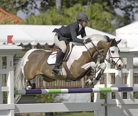 Gorgeous Paint. Mon Gamin Selle Francais stallion   Horses ...