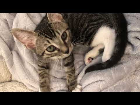 Stray Kitten And His Rescue Journey Youtube Kittens Baby Animals Kitten Rescue