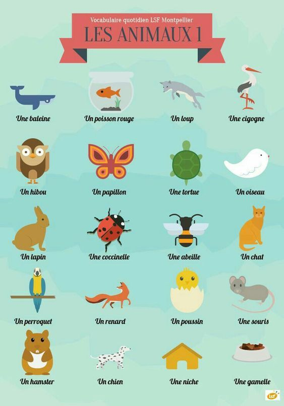 French Words For Animals French Words French Lessons French Flashcards