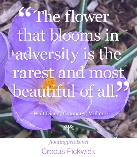 my two cents | Any time I come across a flower blooming in the cracks of cement, or...to read more: http://floatingpetals.net/flower-quote-the-flower-that-blooms-in/   about the author | Mulan is an animated action-drama character...to read more: http://floatingpetals.net/flower-quote-the-flower-that-blooms-in/