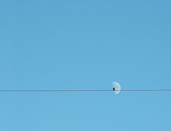 beautiful 'minimalist' photos of birds