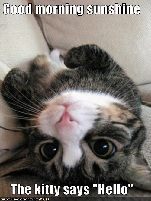 Good Morning Sunshine The Kitty Says Hello Morning Cat Good Morning Cat Good Morning Animals