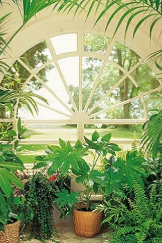 """Wintergarten Fototapete mit Pflanzen Es (k)lebe die Natur! Ohne Frage – blütenreiche Zimmerpflanzen sind eine Bereicherung für jeden Raum: Sie machen nicht nur optisch einiges her, sondern tragen auch zur Verbesserung der Luftqualität bei und sind in der Lage, Wohnraumgifte abzubauen. Doch um die Blütenpracht auf Dauer zu erhalten, braucht man schon mehr als einen grünen Daumen. Zu beachten gibt es viele Dinge. Deshalb sind für alle selbsterklärten """"Nicht-Gärtner"""" florale Klebemotive die Lösung"""