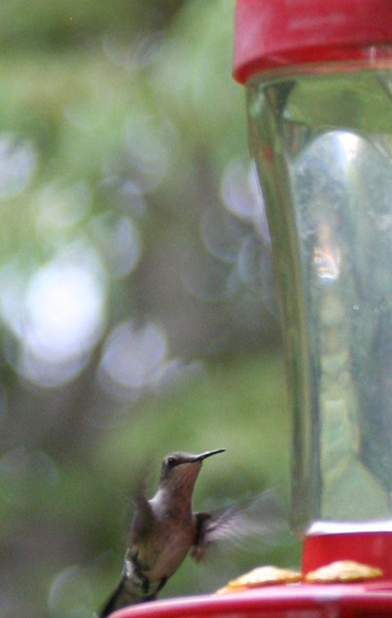 close up image of a hummingbird at the feeder