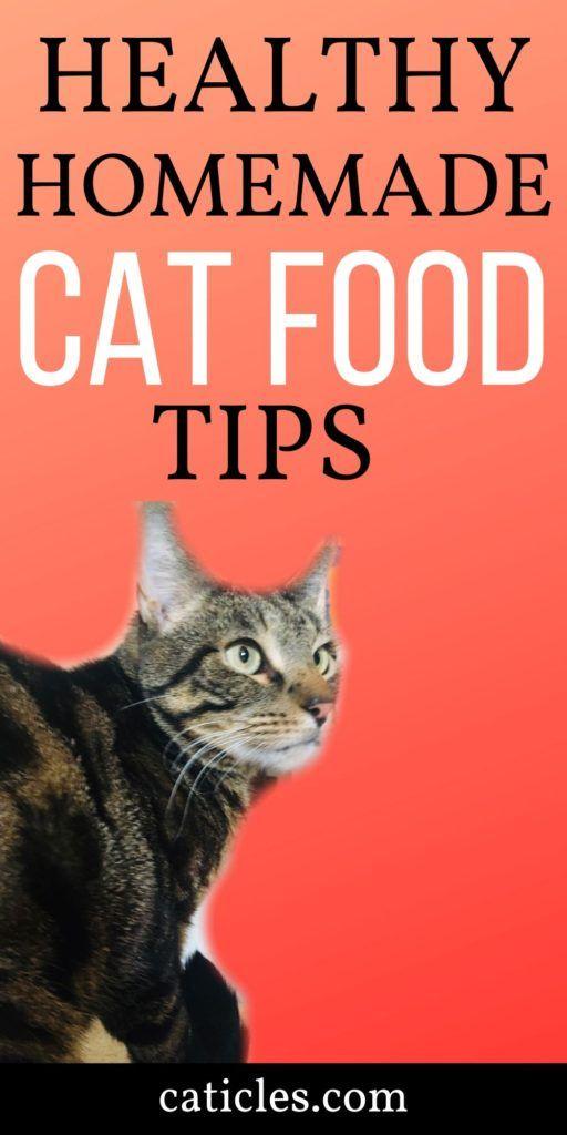 Natural healthy cat food recipes Benefits Of Homemade Cat Food Plus Healthy Easy Recipes Homemade Cat Food Cat Food Brands Raw Cat Food Recipes