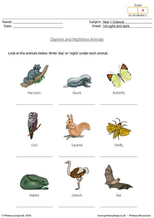 Year 1 Science - Daytime And Nighttime Animals. Primary Resources From  Www.primaryleap.co.uk Animal Worksheets, Childrens Worksheets, Science  Worksheets