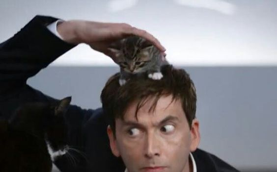 David with a kitten on his head.