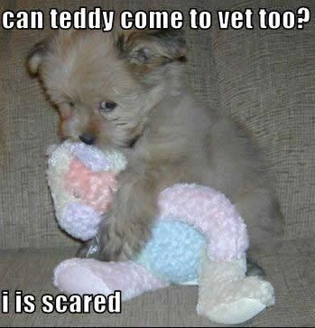 If only I could bring my teddy! No an eleven year old can´t habe a teddy to squeeze during shots! :(