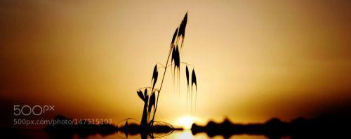 Gras (Istrien) by Archko  sunrise travel sun plant Sonnenaufgang Reise Sonne Gras Gegenlicht Istrien Archko